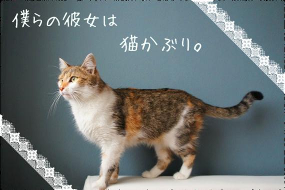 僕らの彼女は猫かぶり。2期 【名前変換オリジナル】 - 占い